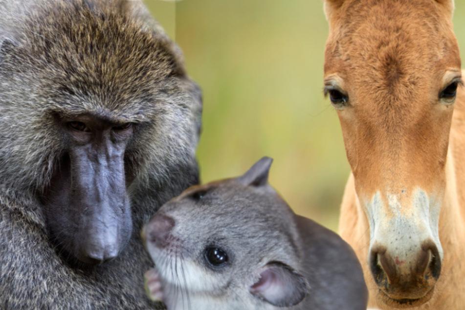Kräuter, Früchte und Co.: So kreativ verhüten Tiere!