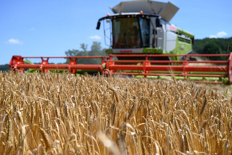 Nach drei Dürre-Jahren: Sachsens Bauern rechnen mit guter Ernte