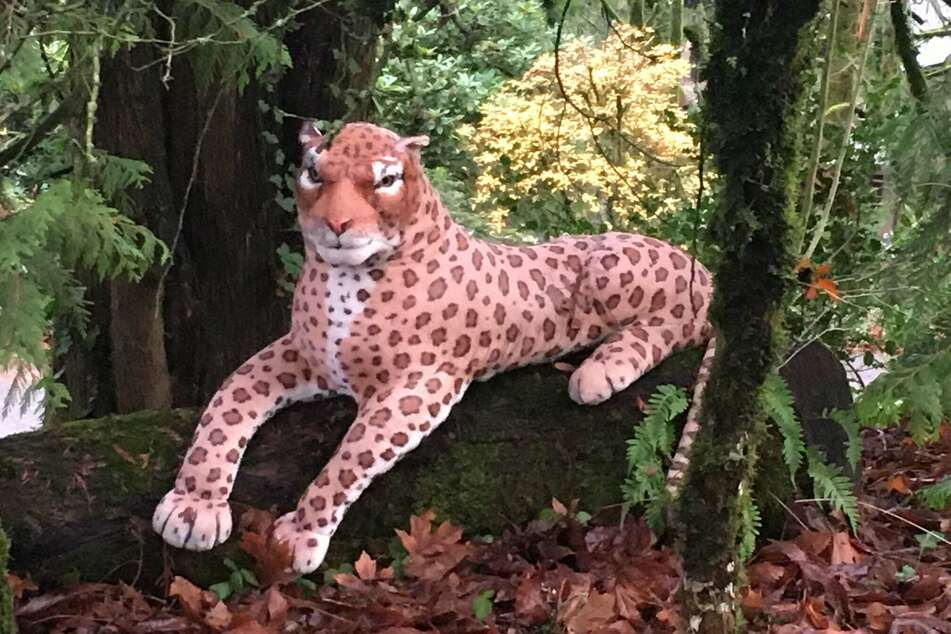 On closer inspection, the big cat turned out to be a stuffed animal.