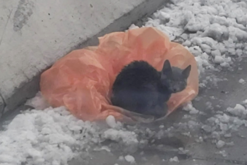 The poor abandoned cat was shivering in the sludge on the freeway and trying to stay warm by sitting on a plastic bag.