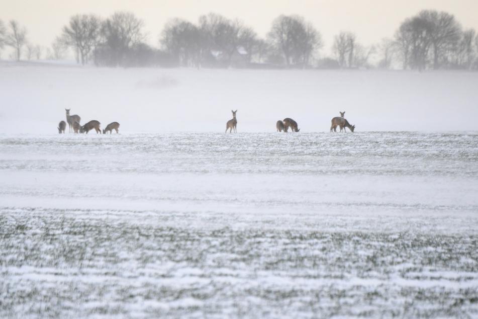 Eiseskälte schadet bedrohten Arten, andere Tiere profitieren
