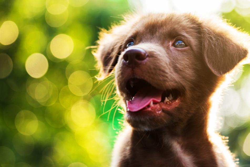 Das sind die beliebtesten Hundenamen in Deutschland