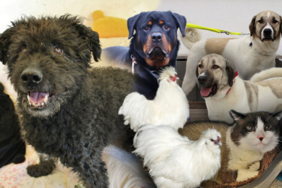 7 besondere Tiere: Diese Hunde, Hühner und Katzen suchen endlich ein Zuhause