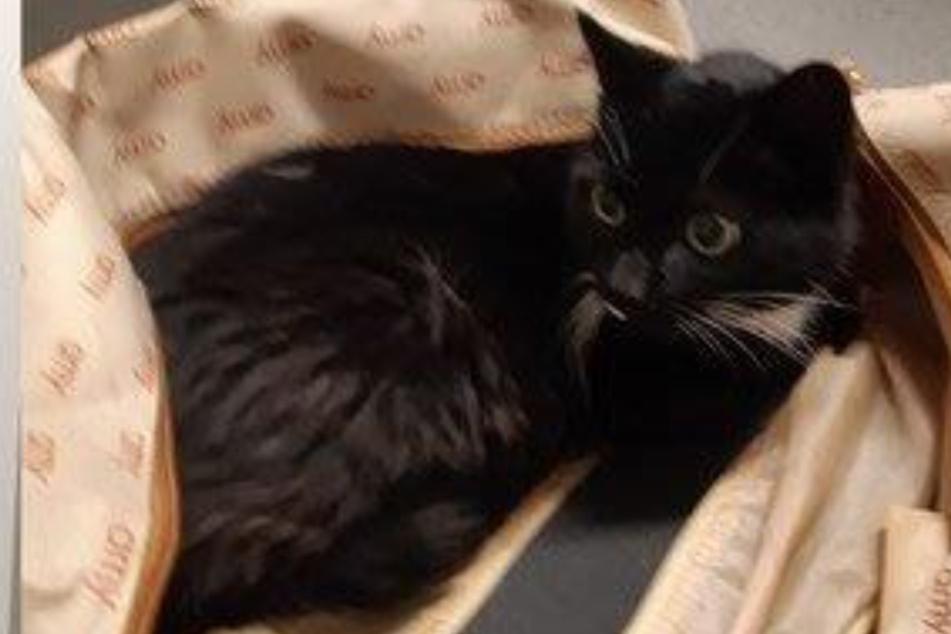 Katze vor sicherem Tod gerettet: Samtpfote in Reisetasche gepackt und in Schließfach gesperrt