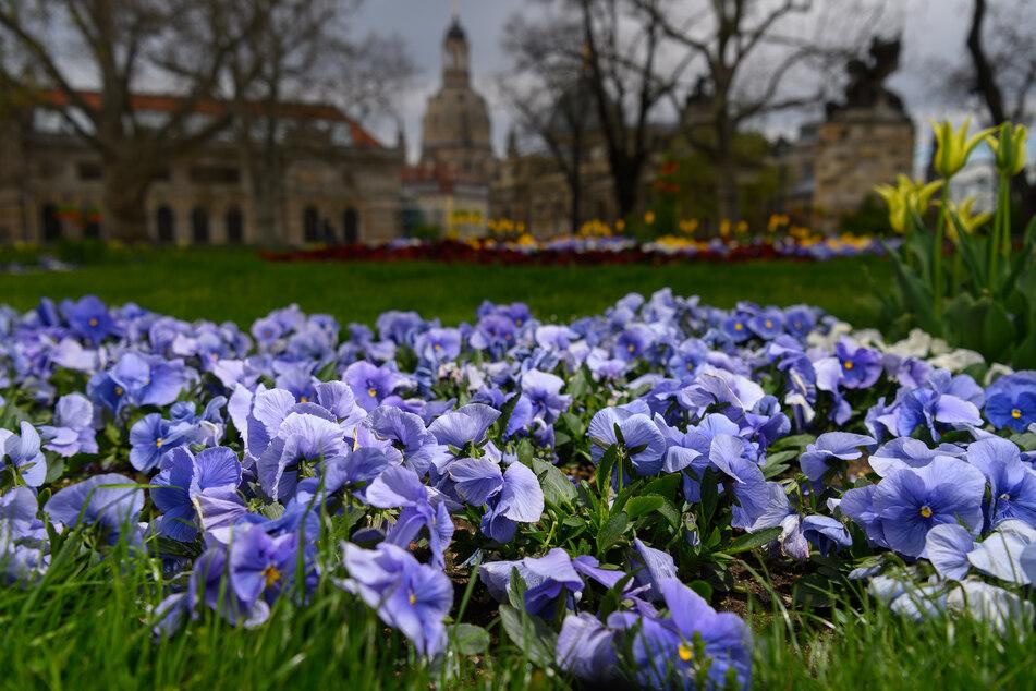 Der Frühling ist in Dresden eingekehrt.
