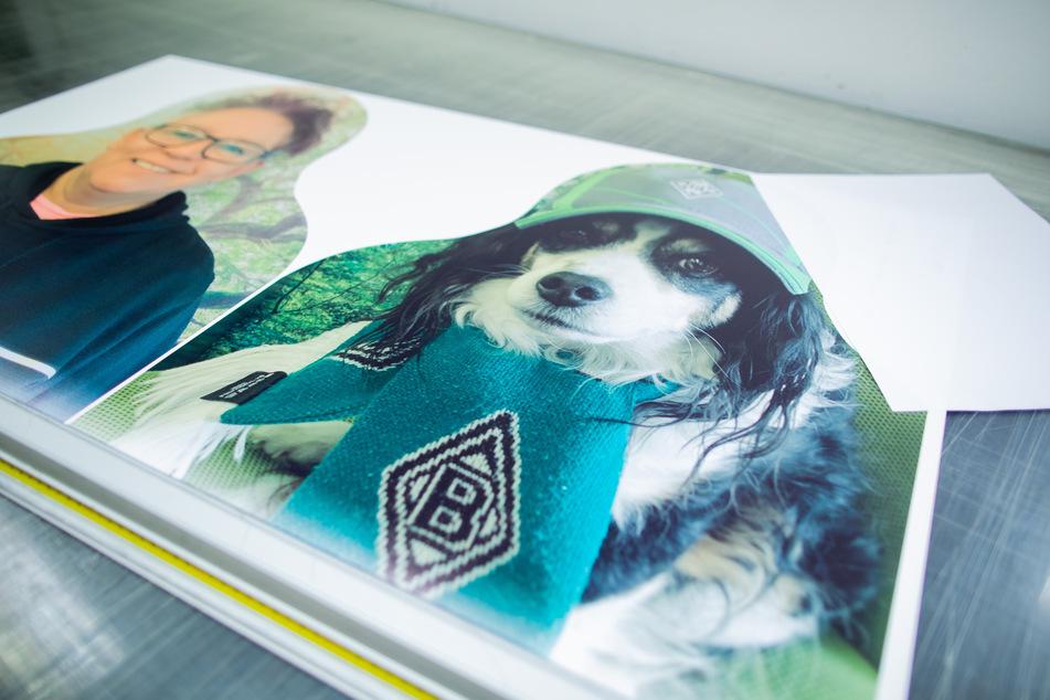 """Ein Testdruck zweier """"Pappkameraden"""" - Fans von Borussia Mönchengladbach - , liegen in einer Druckerei."""