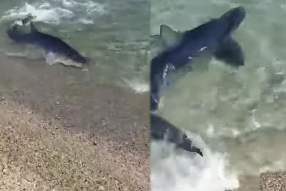 Ein Strandspaziergänger filmte das seltene Spektakel.