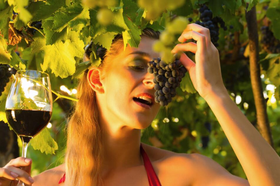 Wer kann schon einem guten Wein widerstehen?