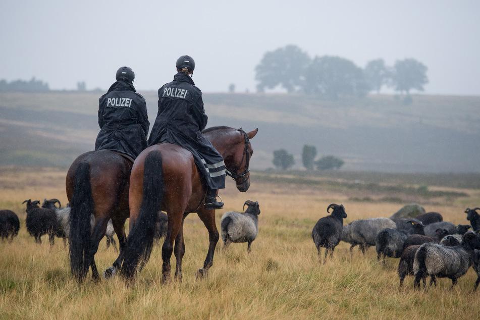Zwei Polizistinnen reiten auf Pferden durch die Lüneburger Heide. (Symbolbild)