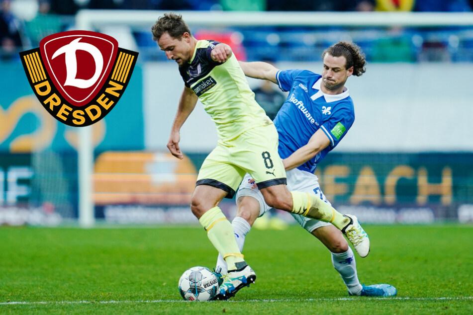 Zweiter Neuzugang: Dynamo angelt sich Yannick Stark