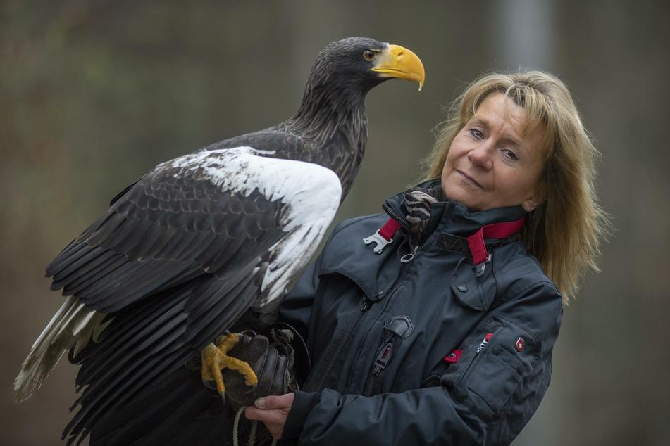 """Der Riesenseeadler """"Grobi"""" wird seit rund zwei Wochen vermisst. Die Inhaberin der Falknerei Bergisch Land in Remscheid, Carola Schossow, sucht nach dem Greifvogel."""