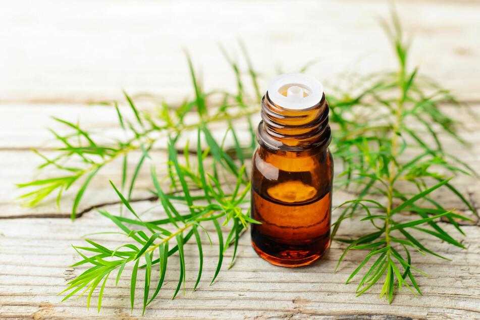 Teebaumöl soll ebenfalls Mücken wirkungsvoll vertreiben.