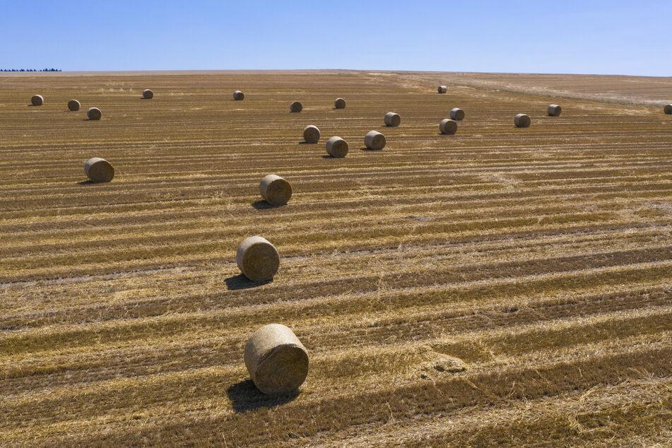 Deppen stellten in der Nacht auf Sonntag etliche Strohballen im Erzgebirge aufrecht (Symbolbild).