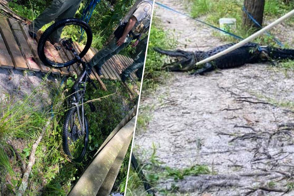 Der Mann verlor die Kontrolle über sein Fahrrad und stürzte dabei in das Gewässer – dort wurde er von einem Alligator attackiert.