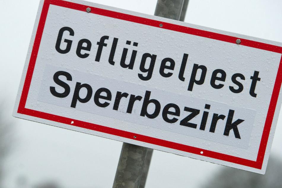 In Berlin-Lichterfelde ist bei einer toten Wildgans die Geflügelpest nachgewiesen worden. (Symbolbild)