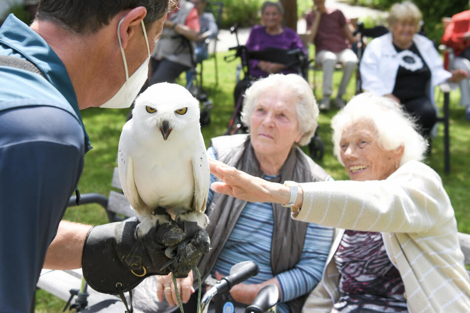 Der Falkner Paul Klima trägt seine Schneeeule Hedwig auf dem Arm, die von Bewohnerinnen des Seniorenheims gestreichelt wird.