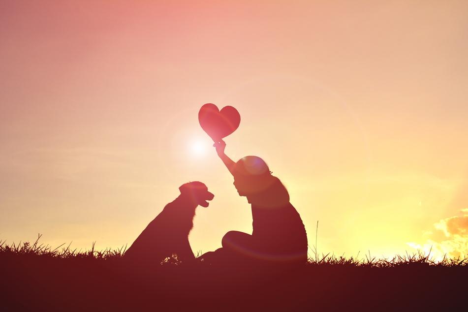 Tier Sternzeichen: Welcher Hund passt zu Deinem Sternzeichen?