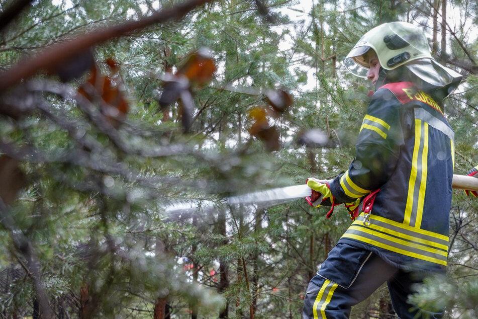 Die ersten Wälder brennen schon! Rekordwärme von bis zu 25 Grad erwartet