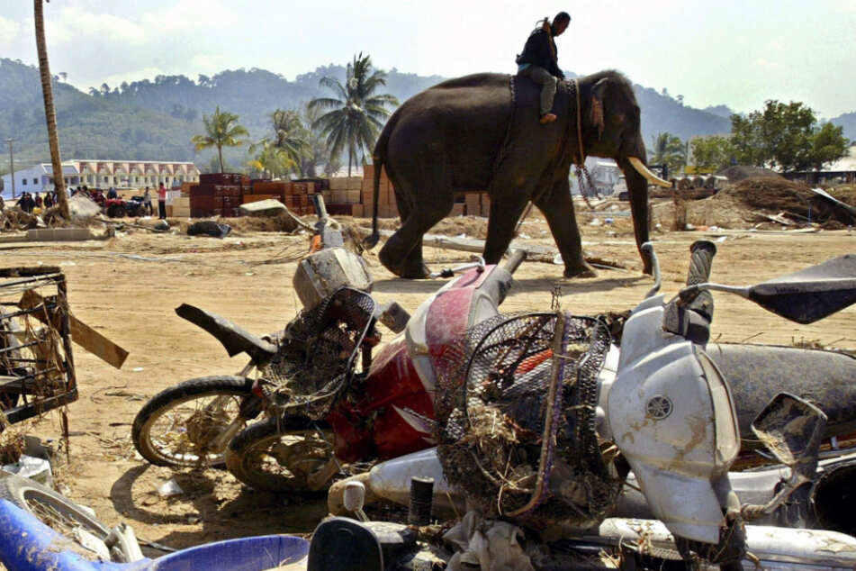 Der Tsunami 2004 kam für die Menschen überraschend - nicht jedoch für die Elefanten