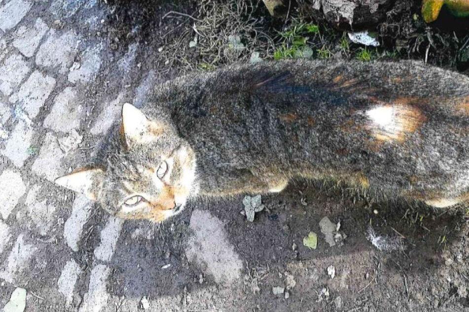 Katze angeschossen: Polizei sucht brutalen Tierquäler