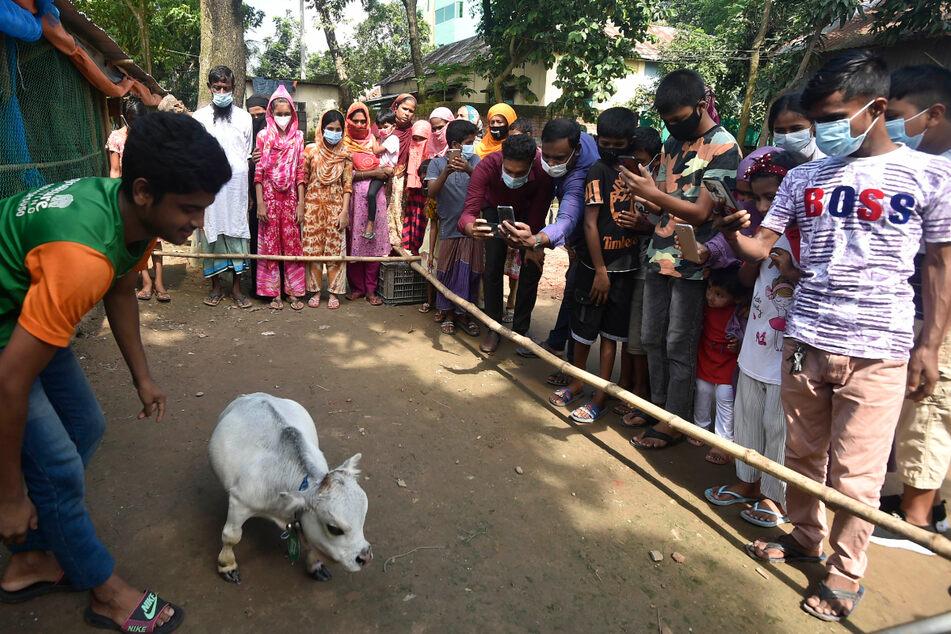 Vorige Woche kamen noch unzählige Menschen, um das kleine Tier zu sehen. Jetzt ist die Farm wegen der Pandemie für Besucher geschlossen.