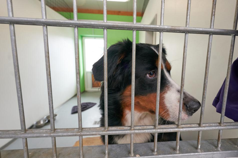 Die Heimtiere und auch ihre Betreuer sind auf regelmäßige Spenden dringend angewiesen.