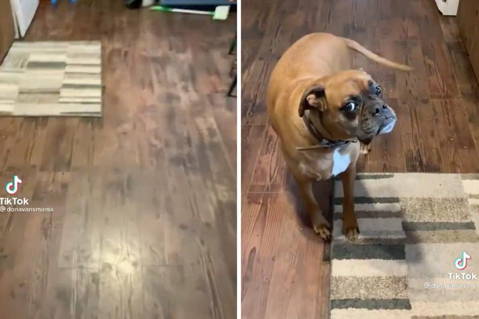 Eine Frau filmt, wie sie in ihrer Wohnung herumläuft. Kaum dreht sie sich um, bewegt sich ihr Hund Burger (r.) plötzlich nicht mehr.