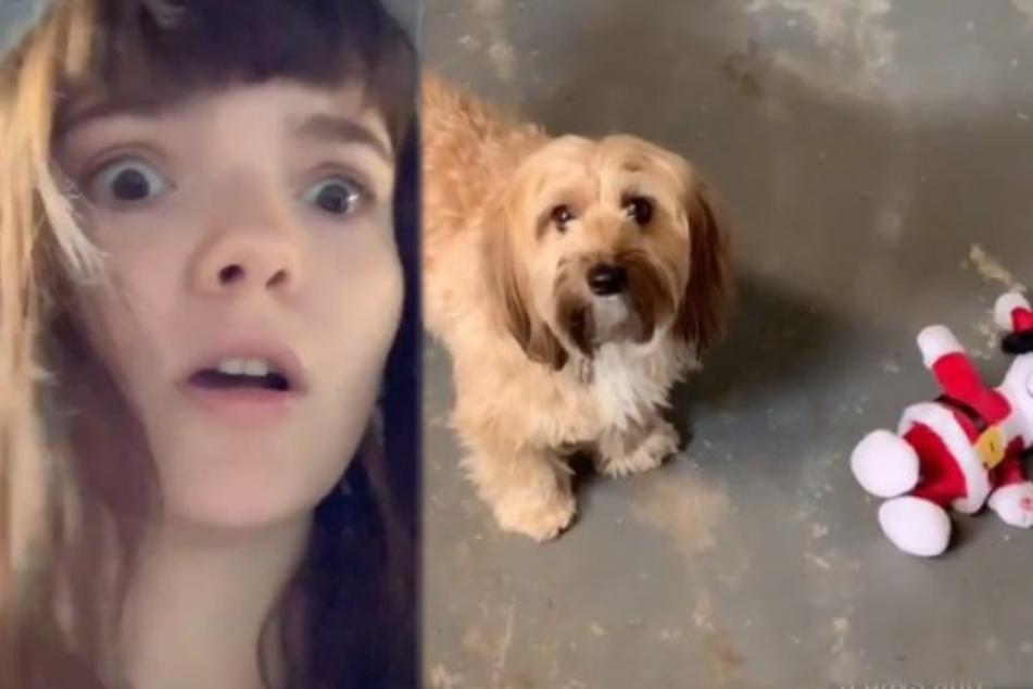Kimberlys Hund Daisy scheint sich ebenfalls komisch zu verhalten.