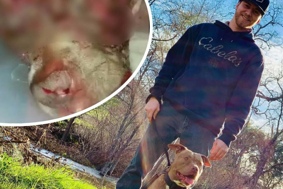 Kaleb Benham mit seinem geliebten Hund Buddy (r.). Bei dem Bärenangriff wurde der Vierbeiner stark verletzt. Nur dank seines Besitzers überlebte er. (Bildmontage)