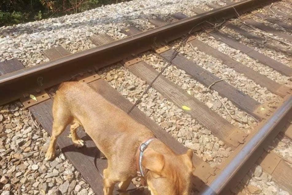 Grausam: So wurde der arme Hund von Dan und Jennifer Winkelman vorgefunden.