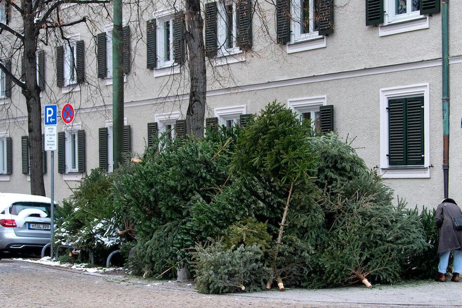 Fünf Meter hohe Flammen: Feuerwehr muss Weihnachtsbäume in München löschen
