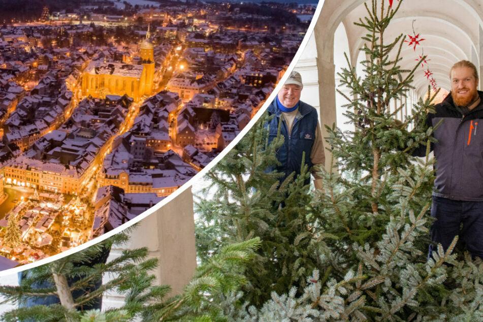 Das Erzgebirge ist nicht nur für seine Handwerkskunst bekannt. Traditionell erstrahlt es auch in Corona-Zeiten in weihnachtlichem Gewand (l.). In Kamenz werden hundert Weihnachtsbäume für einen Parcours aufgestellt.