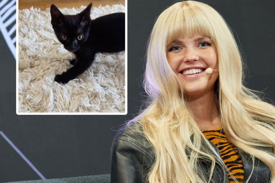 Bonnie Strange nimmt süßes Kätzchen auf und bekommt prompt Kritik