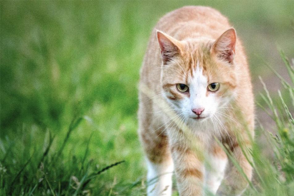 Hund jagt Katze bis ins Wohnzimmer von Familie und reißt sie dort