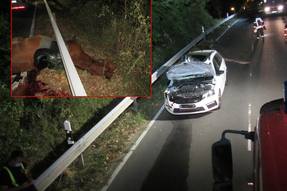 Auto kracht mit Reiter zusammen: Pferd muss erschossen werden