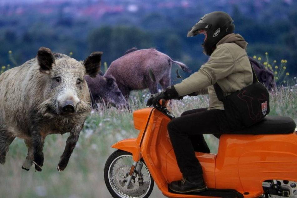 Bei Unfall: Schwalbe verlor gegen Wildschwein