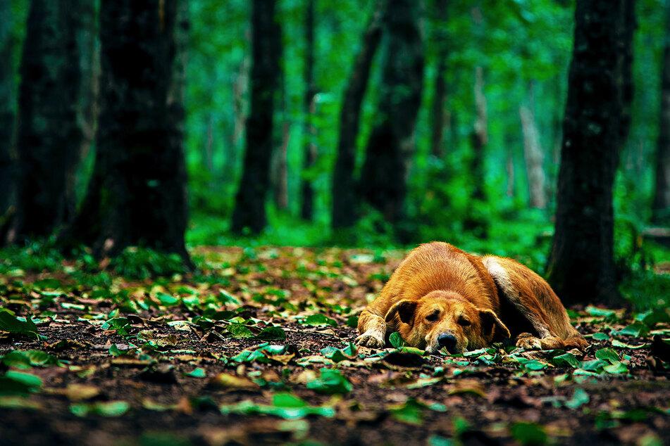 Der Hund wurde an einem Baum festgebunden, ehe er erschossen wurde. (Symbolbild)