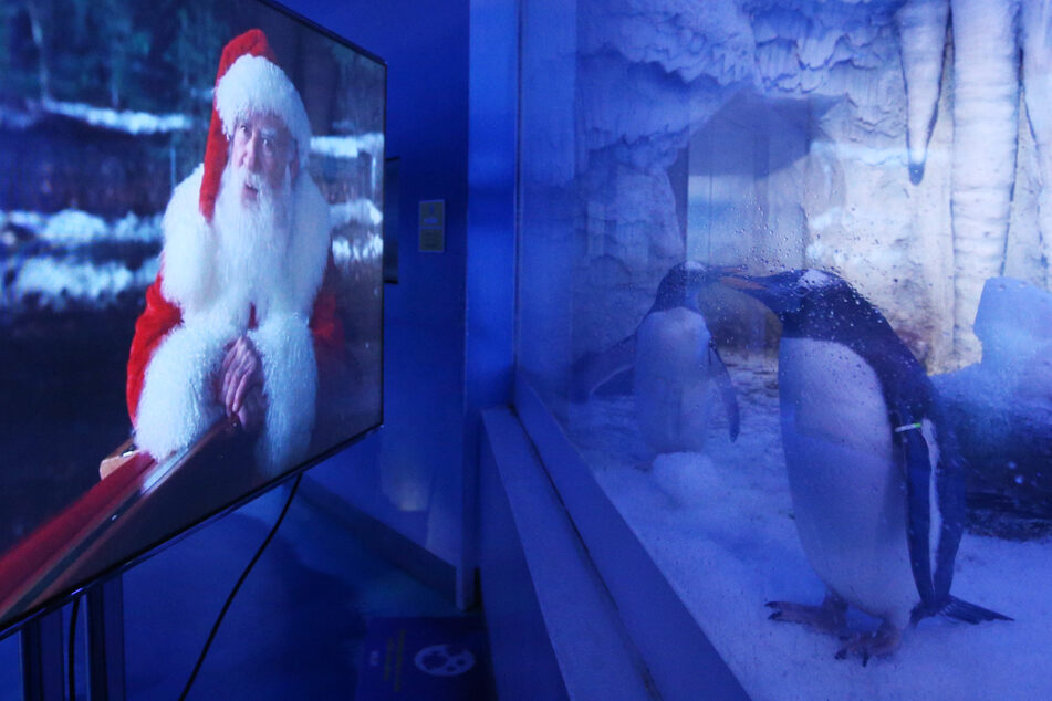 Pinguine in London schauen im Lockdown Weihnachtsfilme