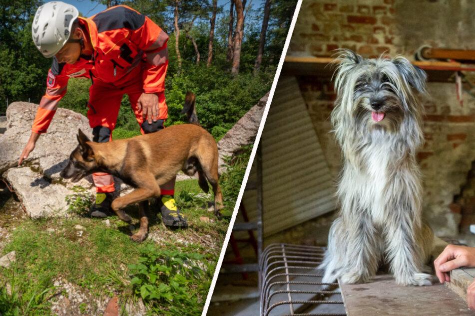 Hunde-Helden: Sie schnüffeln nach Verschütteten und retten Leben