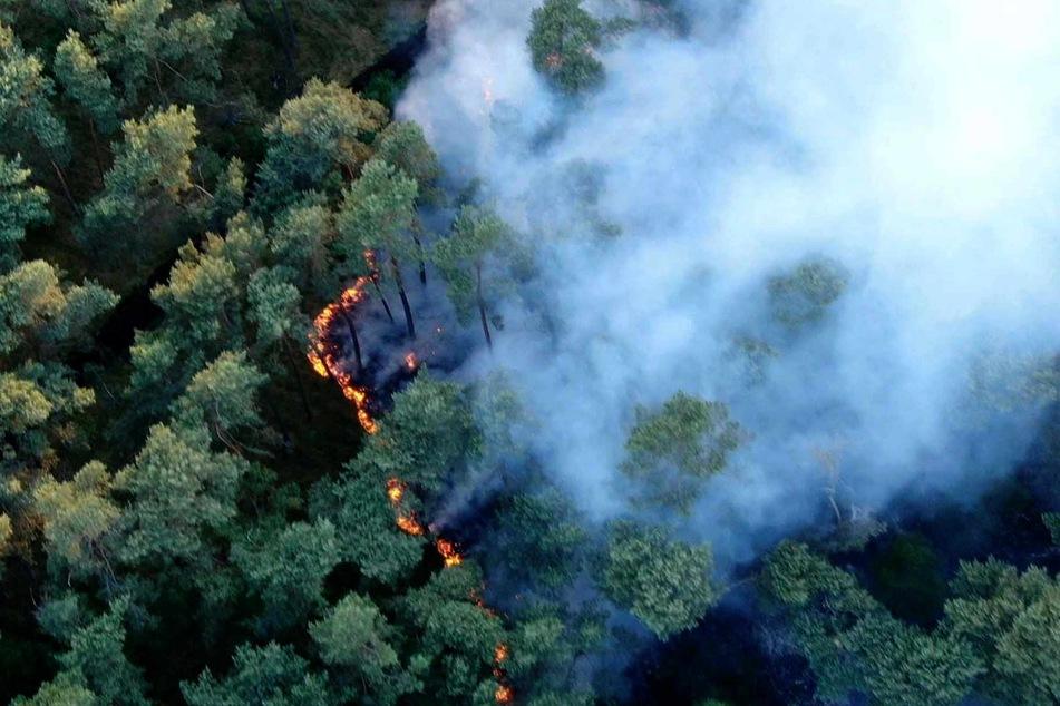Ein 300 mal 300 Meter großes Waldstück zwischen der Autobahn 14 und der Gemeinde Wöbbelin im Landkreis Ludwigslust-Parchim ist in Brand geraten.