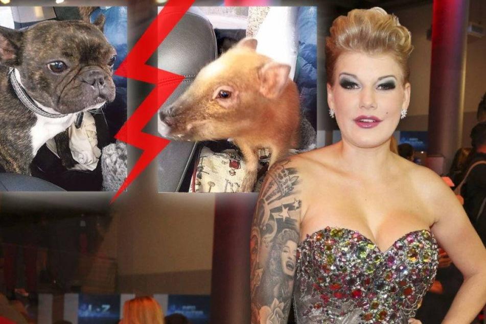 Melanie Müller hat ein schweinisches Problem