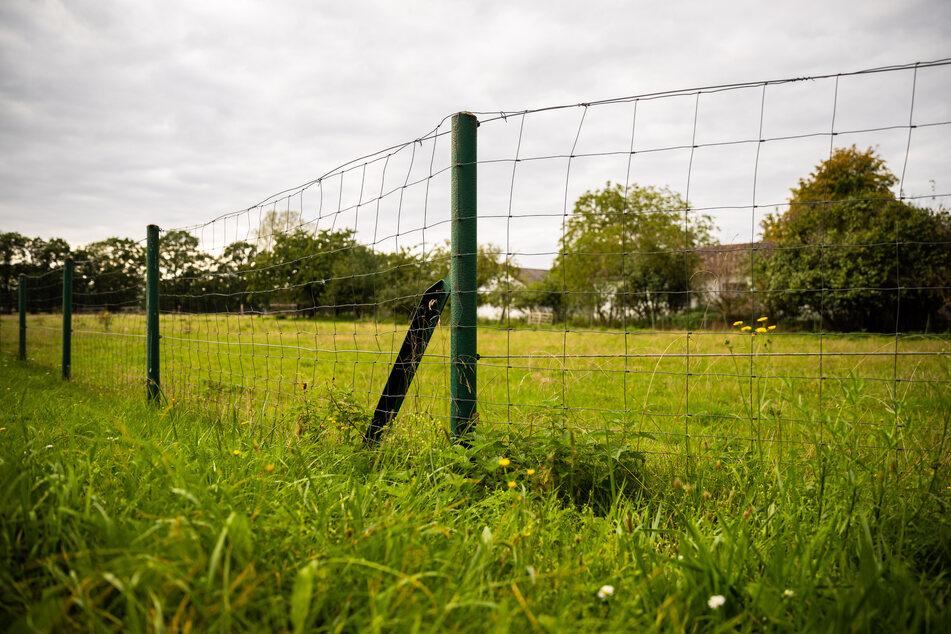 Ein Zaun begrenzt eine Schafweide am Burgdorfer Holz. Wildkameras haben mindestens acht Wolfswelpen in dem Gebiet nordwestlich von Hannover aufgenommen.