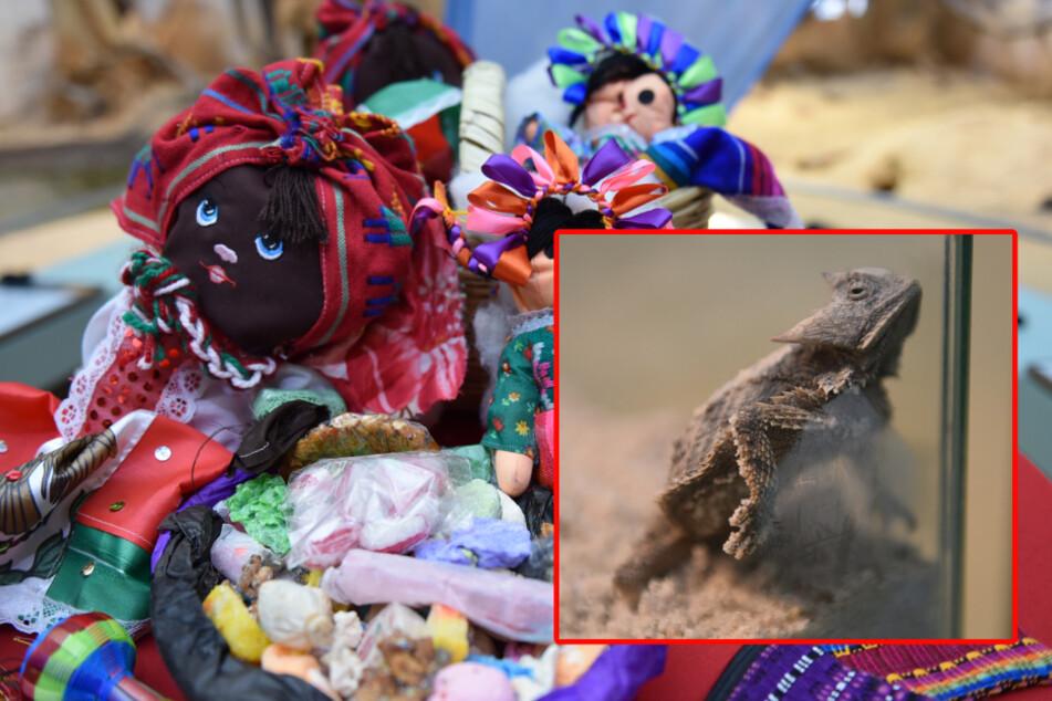 Schmuggler nähen Echsen in Puppen ein: Mehrere Tiere haben das nicht überlebt