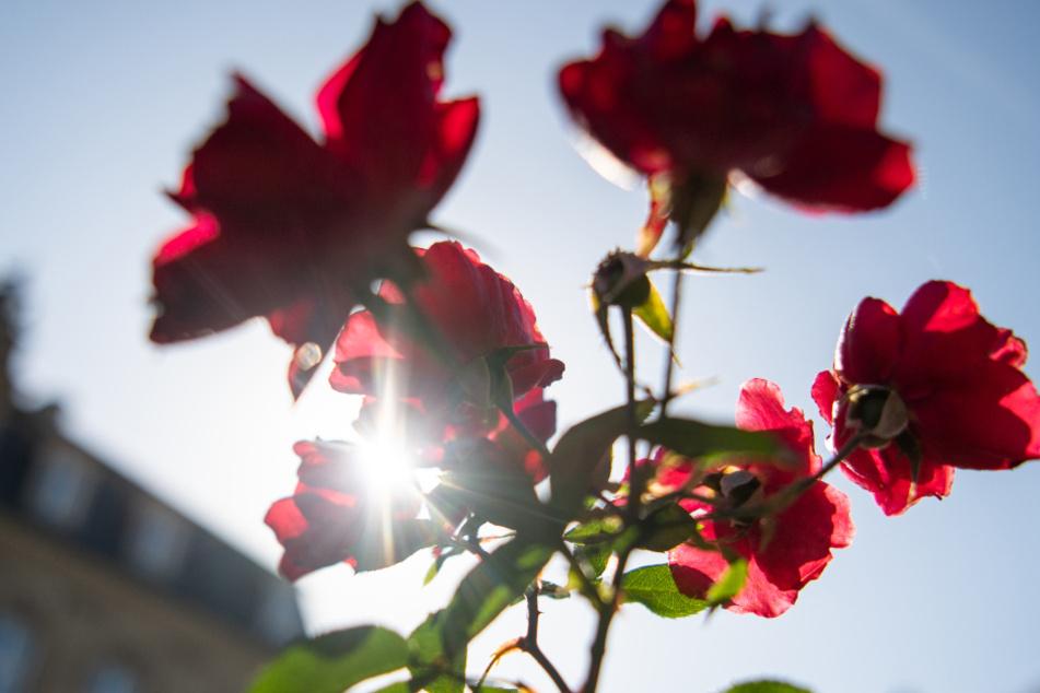 So viele Sonnenstunden gab es im Mai im Ländle