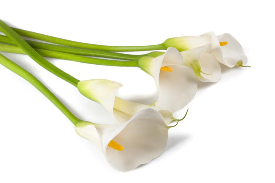 Ein paar geschenkte Lilien waren ein Präsent, das voll nach hinten losging.
