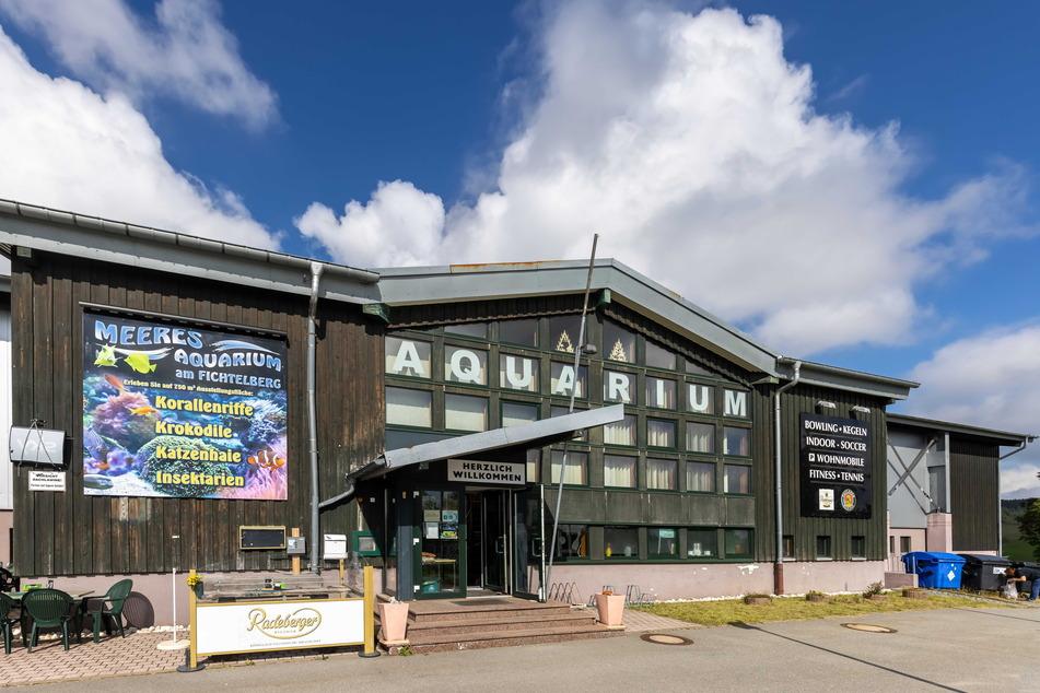 Nach monatelanger Corona-Pause hat das Meeresaquarium am Fichtelberg wieder geöffnet.