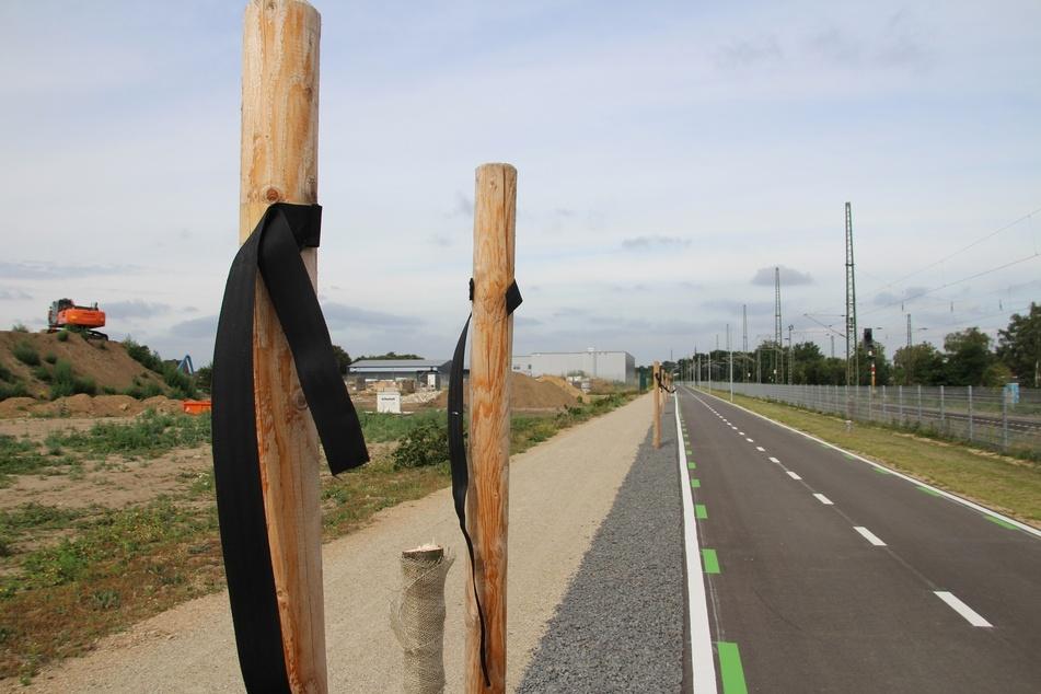 Aus Ärger über den neu angelegten Radweg haben Unbekannte 30 frisch gepflanzte Bäume entlang des Weges abgesägt.
