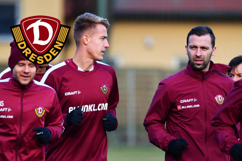 Dynamo-Profis vollständig! Husbauer und Petrak kehren endlich nach Dresden zurück