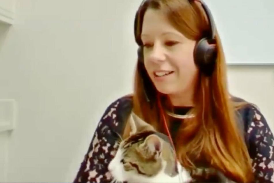 Ungebetener Gast: Katze unterbricht wichtiges Parlaments-Meeting
