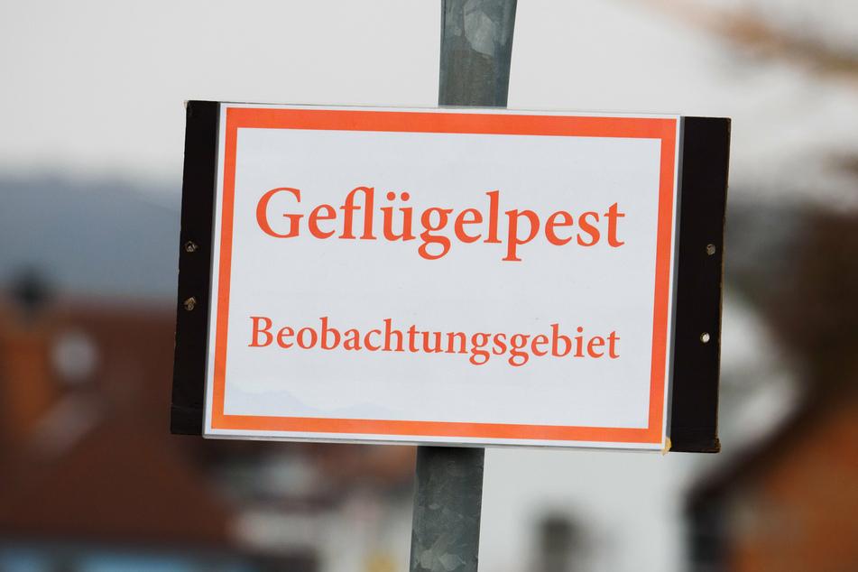 Geflügelpest wütet weiter in Brandenburg: Rund 29.000 Puten getötet